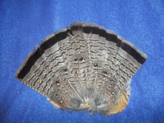 Grouse Feathers Craft