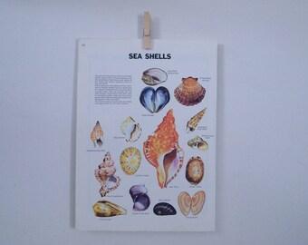 seashells vintage print