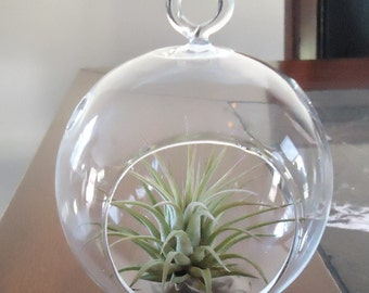 "3.5"" Glass  Plant Orb/Terrarium With Air Plant"