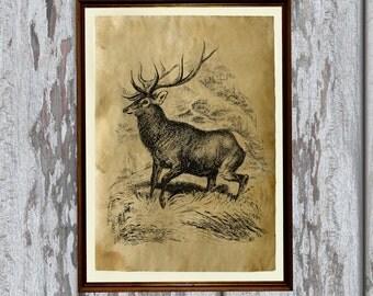 Buck art poster Wild stag print Deer illustration AK174