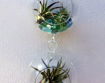 Air Plant Hanging Terrarium Clear Glass  Double Orb Globe Kit with Moss rock or sand