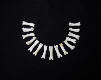 "Multipack DRILLED .75""-1"" Coyote Toes Real Bone Knucklebone Taxidermy Human Finger Bones Phalanx Phalanges Pendant Beads"