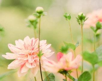 Flower Photography - Dahlia Photography - Garden Photo - Fall Photo - Flowers - Fine Art Photography Print - Peach Coral  Green Home Decor