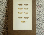 Vintage Moth Lithograph