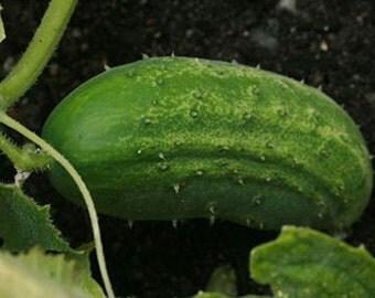 "Cucumber Seeds - ""Little Leaf"""