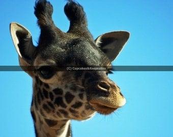"""Animal """"Giraffe"""" Fine Art Photograph"""
