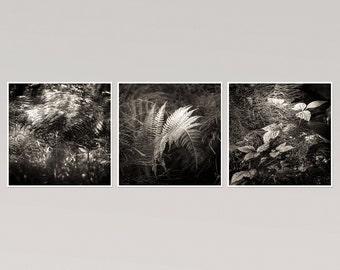 Leaves Wall art set of 3 black and white botanical prints, Fern art photography, leaf prints, square art, woodland nature prints, 8x8, 12x12