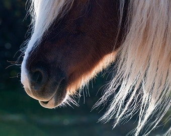 Abstract horse photo, horse art, horse decor, horses mane, equine art, large print, nursery decor