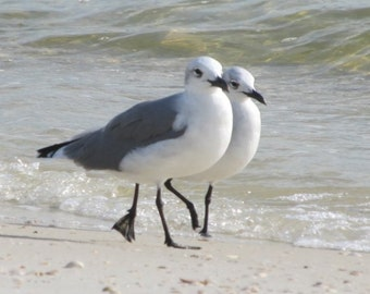 Seagull Art Print Beach Photography Seagull Photo Just the Two of Us Beach Decor Bird Art