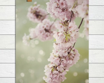 Rhapsody  - Photographic Print - Pink, Cherry Blossom, Spring, Festival, Washington, D.C., Romantic, Floral, Shabby, Cottage, Chic, Decor,