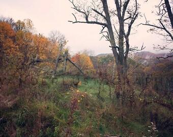 Misty Autumn - Photographic Print - Mountains, Mist, Appalachia, West Virginia, Snowshoe, Mountain, Autumn, Fall, Landscape, Decor, Green,