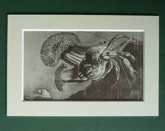1950 Vintage Print Of A Hermit Crab - Crustacean - Nature Print - Sealife - Natural History Print - Rock Pool - Matted Print - Sepia Pictur