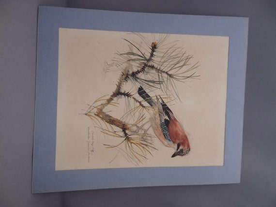 Mads Stage Finch Chaffinch Jay Bird Watercolour Sketch
