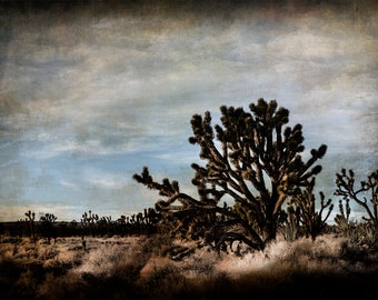 Art,Photography,Joshua Tree - Fine Art Photograph, Arizona, Nature, Cactus, Desert, Americana, Mojave, Mohave, California,Yucca,Photo,Print