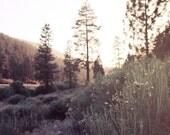 Mountain Grasses - 8x10 - Fine art photography print - Landscape photography - Mountains -  Meadow - Big Bear