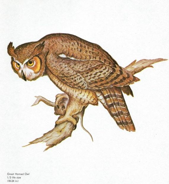 Vintage Owl Illustration - Great Horned Owl Watercolor by Clark    Great Horned Owl Illustration