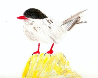 Funny red-legged Tern