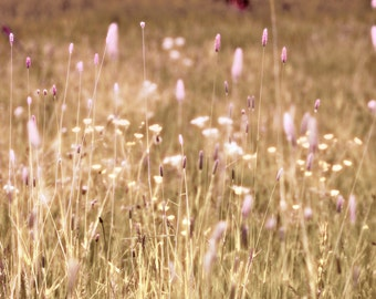 Nature Photography, Meadow, Grasses, Summer, Wall Art, Home Decor.