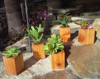 Beautiful miniature redwood succulent planters 5 in 1 set!