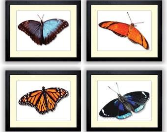 Realistic Butterflies Butterfly Art Print Set of 4 Blue Red Orange Butterfly Prints Wall Decor Modern Minimalist