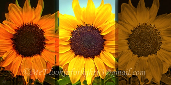 Sunflower Photo Art, Yellow Floral Photo, Flower Pattern, Abstract Sunflower art, Floral Triptych, Yellow Pattern Art, Canvas Gallery Wrap