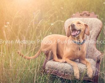 Dog Chair Portrait Print, Fine Art Photography Print, Purrfect Pawtrait Pet Photography, Animal Photography