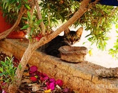 Cyprus Cat - Fine Art Photography, cat photography, wall decor, Print 8x12, cat photo print, kitten photo, animal photography, wall art, cat