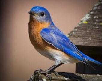 Unique Cedar Blue Bird House