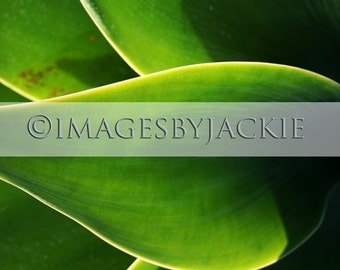 Abstract Leaves 3 Fine Art Photography Instant Download
