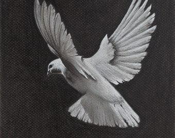 "Black and White Charcoal Giclée ""Dove"" print"