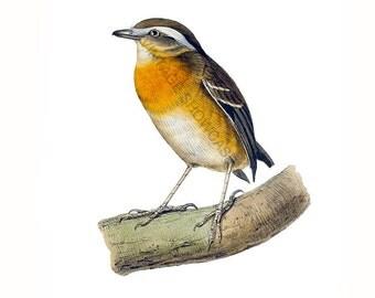 Bird Graphic - High Resolution Digital Download No.283