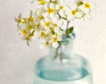 Flower Art Print, Flower Photo, Floral Photography Print, Shabby Chic Wall Art, Home Decor, Yellow Rock Cress