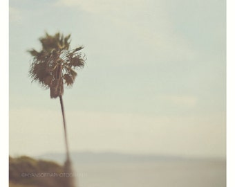 photography, California palm tree photograph, beach photo, SoCal, mint blue green, surreal, dreamy photo, California art print, San Diego