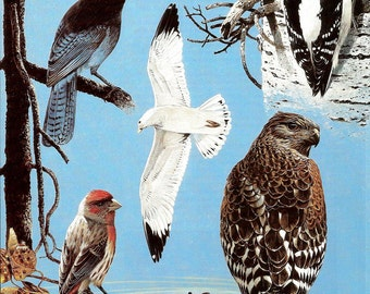 Bird Print - Woodpecker - Hawk - Warbler - Finch - Vintage Audubon Book Plate - Jay - Gull - Duck - Bird Book Plate - John Dawson - 1980s