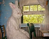 White Rabbit Photography Print - Being Invisible - 5x5 fine art print