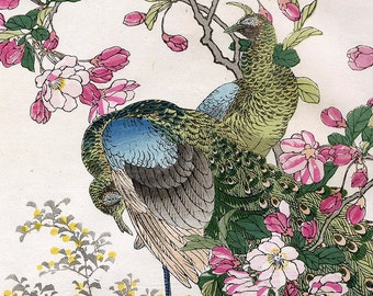 Instant Download Peacock and Apple Blossoms Japanese  Pink Teal Blue Green You Print Digital Images 7.5 x 11