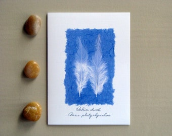Feather greeting card, Pekin duck, blue and white, natural white feathers, no.16