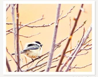Fluff - Bird Photo - Spring Bird Photograph - Nature Photography - Bird Wall Art - Nursery Decor