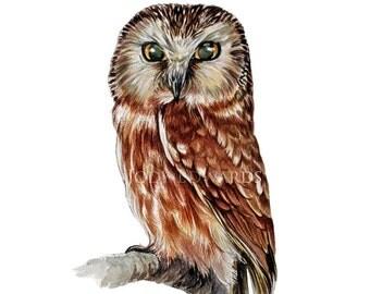 Owl print - Northern Saw Whet Owl