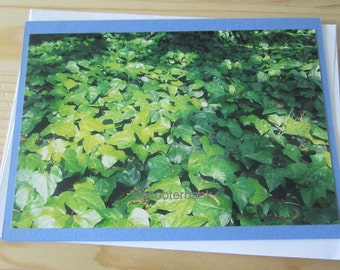 Ivy Blank Greeting Card Photography