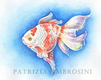 Original 10x8 Watercolour  ryukin. Not a print ..original painting red fish black fish koi- gold-bubble eyes -riukin -demekin