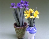 Iris Paper Flower Kit  for 1/12th scale Dollhouses, Florists and Miniature Gardens