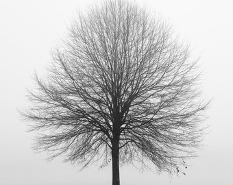 black and white photography, tree photography, winter photography, landscape photography, lone tree, minimalist, trees in fog, minimal