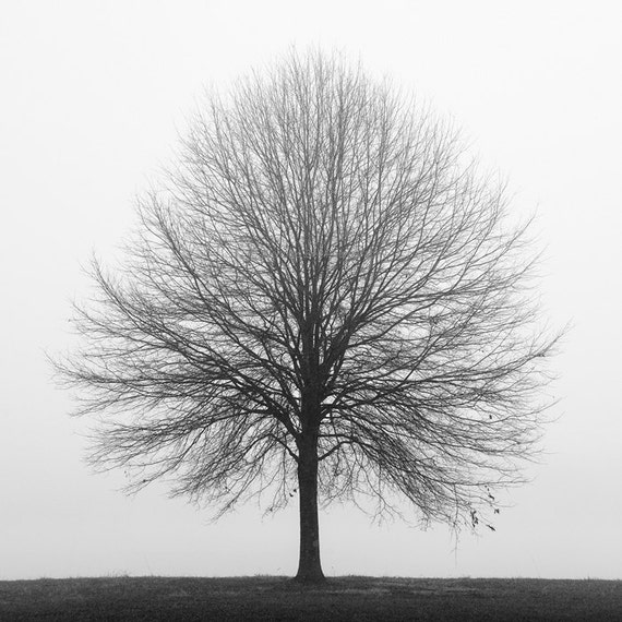 black and white photography, tree photography, nature photography, lone tree, landscape, fog, foggy, tree in fog, Solitude