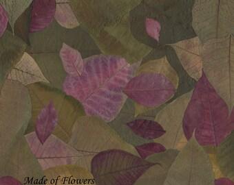 Pressed Flower Art Print -Poinsettia Pile