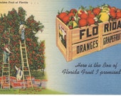 Crate of Oranges and Grapefurit Classic Florida postcard - Vintage