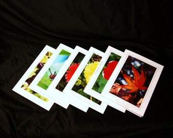 Your Choice--6-Pack Set of 5x7 Nature Inspired Photo Greeting Cards