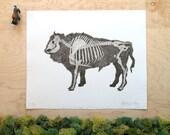 Bison Skeleton - Bison Print - Bison Bones - Bison Anatomy - Animal Skeleton Etching - Skull - Intaglio Etching - Hand-Pulled Print 11x14