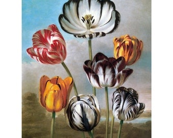Striped Tulips Card - Tulip Flowers Greeting Card from Vintage Image