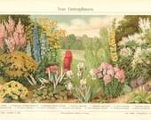 1904 Ornamental Plants, Sneezeweed, Cushion Spurge, Persian Daisy, German Iris, Sunflower, Primrose, Burning Bush Antique Chromolithograph